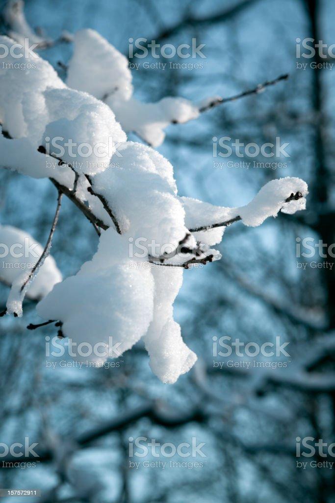 Winter Branch royalty-free stock photo