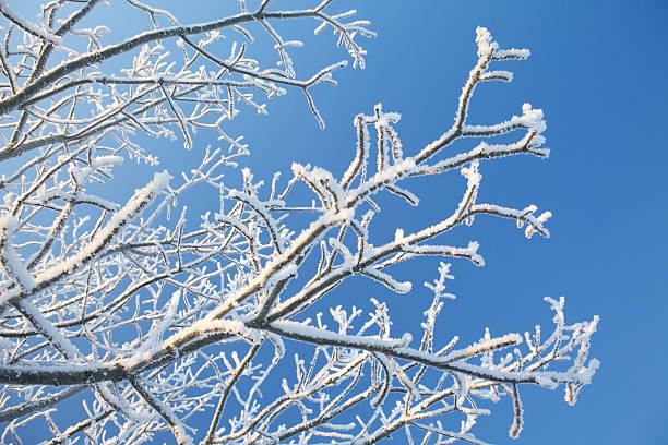 Winter Branch stock photo