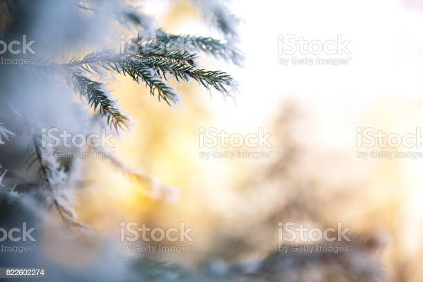 Photo of Winter Branch