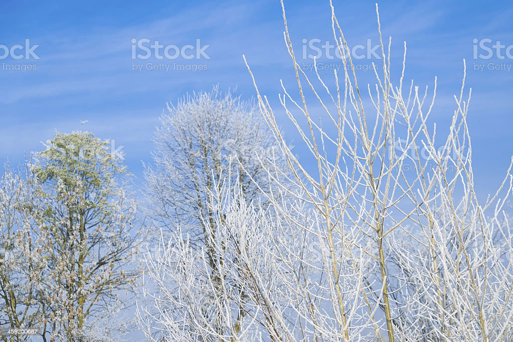 Winter branch XXXL royalty-free stock photo