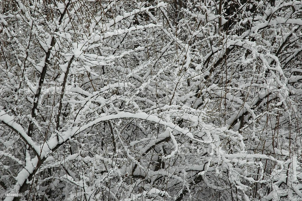 Winter Branches Background stock photo