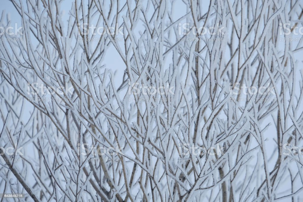 Winter Branches Pattern stock photo