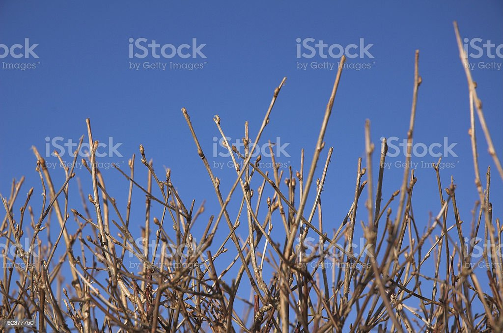 Winter branches stock photo