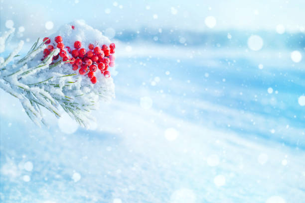 winter hellen hintergrund. - schneeflocke sonnenaufgang stock-fotos und bilder