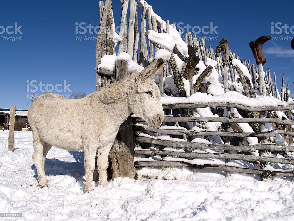 Inverno burro foto stock royalty-free