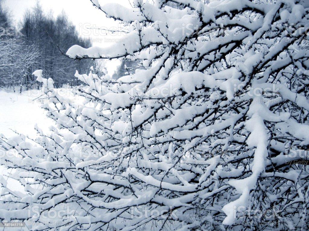 Winter bush under a snow stock photo