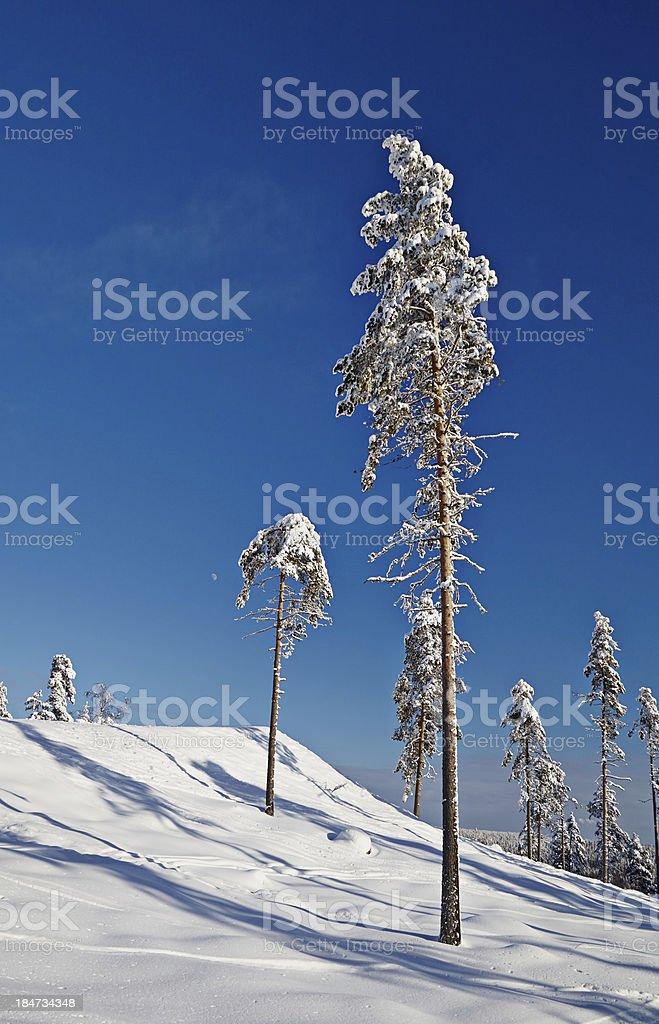 winter calm  landscape royalty-free stock photo