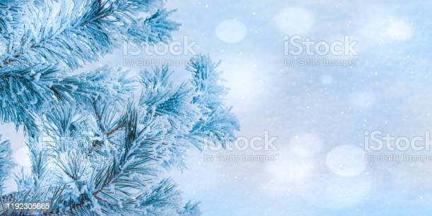 Winter christmas background with pine branches in hoarfrost and bokeh picture id1192305665?b=1&k=6&m=1192305665&s=612x612&h=7kbpismowqjisgcjkxm6wyuq 6ah9jhqerd1qsgwiew=