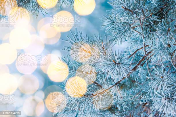 Winter christmas background with pine branches in hoarfrost and bokeh picture id1192924219?b=1&k=6&m=1192924219&s=612x612&h=kf j84z8uuh88om227 5ufb0l0ni d8xuxuuhwwvzak=