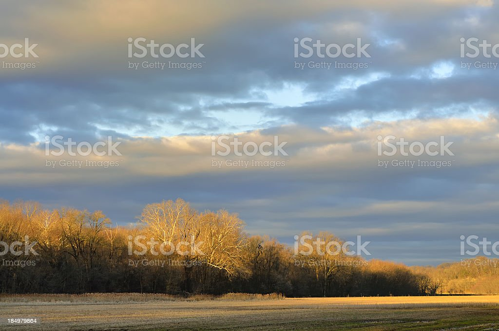 Winter Cornfield stock photo