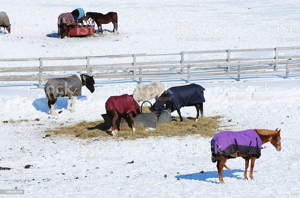 Winter Corral stock photo