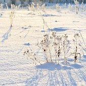winter countyside view, hoar-frost in winter