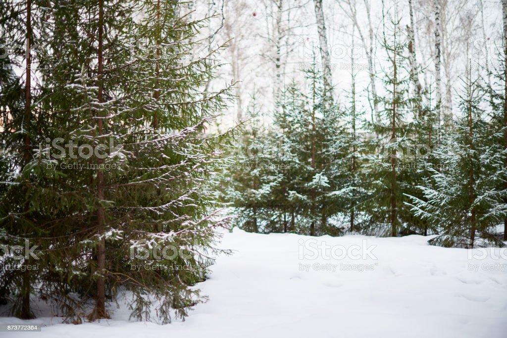 Wintertag im malerischen Wald – Foto
