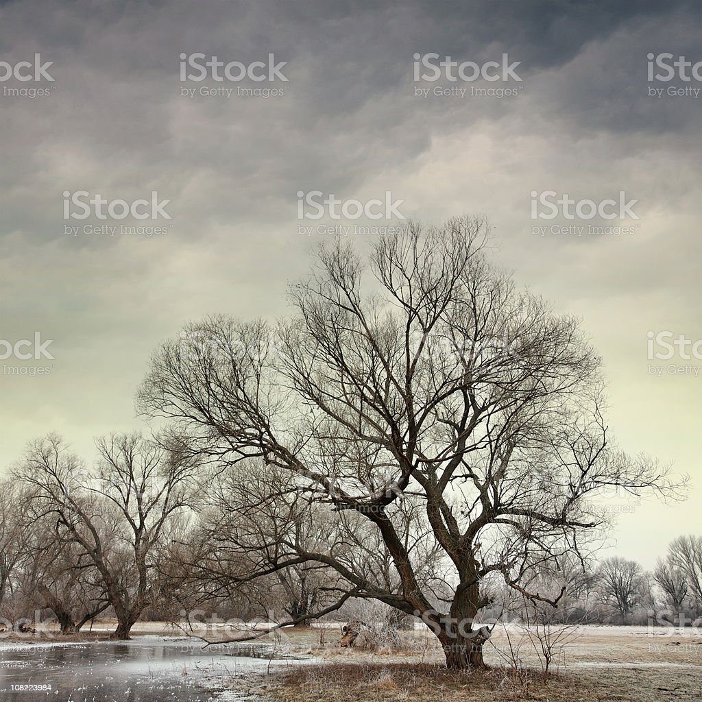 Winter Day with Trees royalty-free stock photo