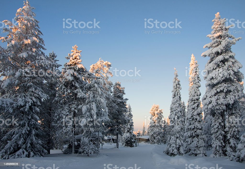Winter deep snow coniferous forest at sunrise time stock photo