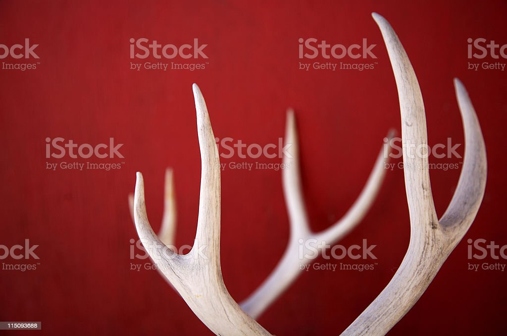 winter deer antlers stock photo
