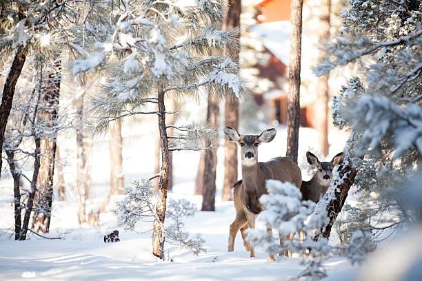 Winter Deer in Snow stock photo