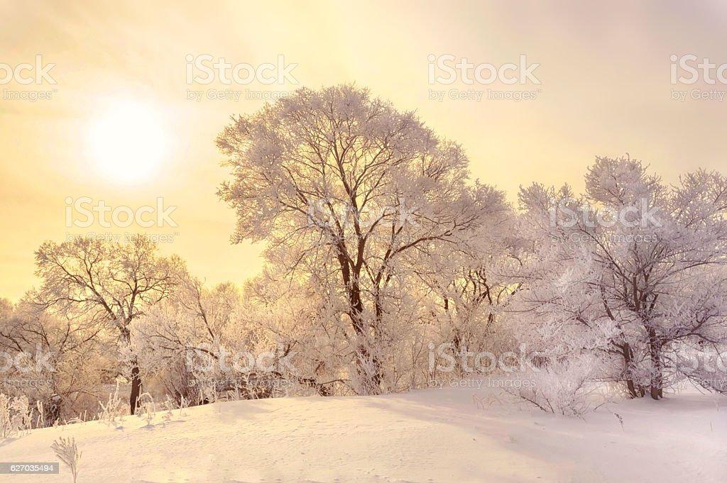 Winter delight – Foto