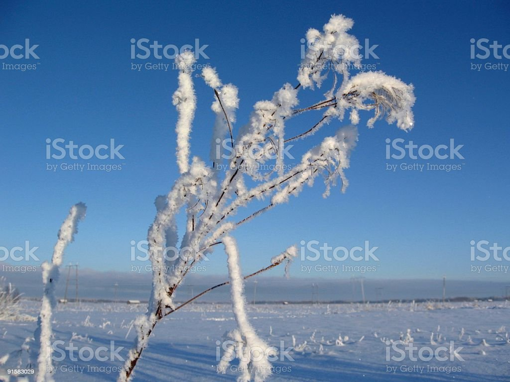 Winter detail royalty-free stock photo
