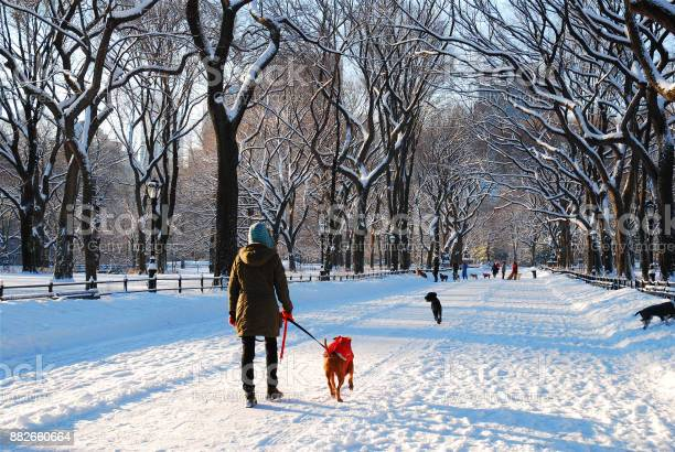 Winter dog walking picture id882660664?b=1&k=6&m=882660664&s=612x612&h=bpgmlcsjgzt2fwul6temz2kbuzqftaf9deb oy4cfjm=