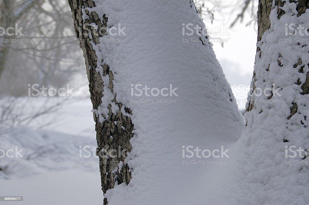 Winter etude … royalty-free stock photo