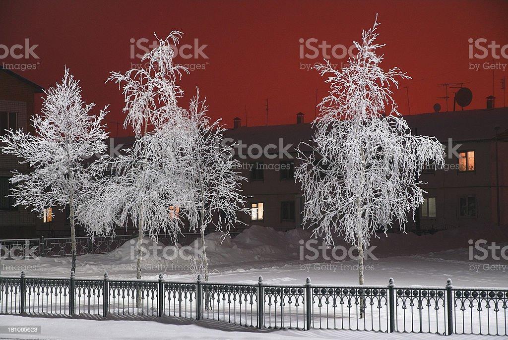 Winter. Evening. White trees. royalty-free stock photo
