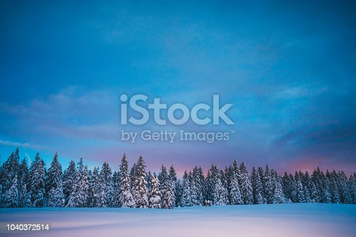 Winter landscape with pine trees.