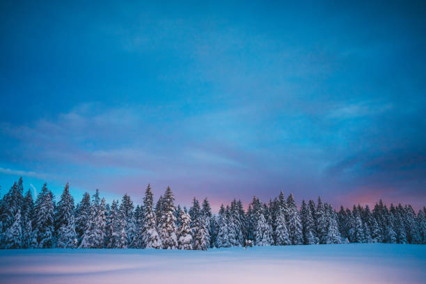 Winter fairy tale picture id1040372514?b=1&k=6&m=1040372514&s=612x612&w=0&h=smxwx 9pon4ii3qpwm86zx fifflehdiqurut3wdbqg=