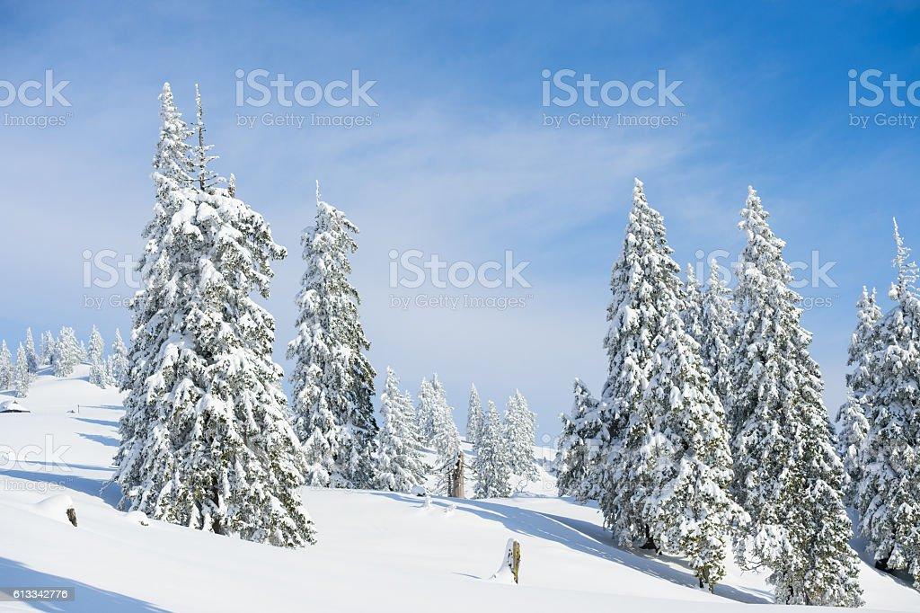 Winter fairytale stock photo