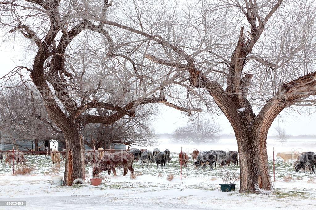 Winter Farm Scene royalty-free stock photo