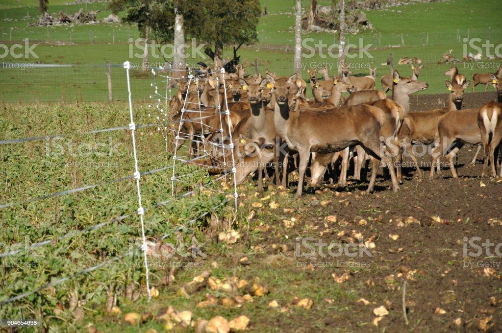 winter feed royalty-free stock photo