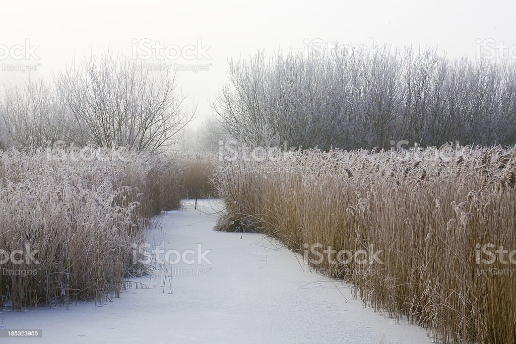 Inverno fen - foto de acervo