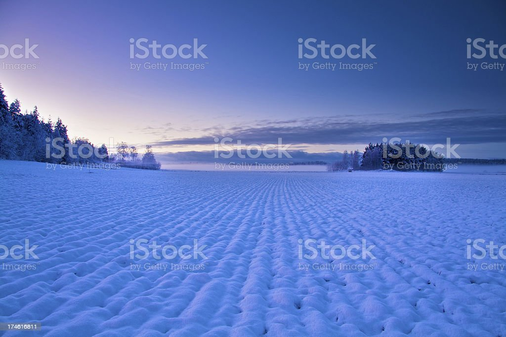Winter Field royalty-free stock photo