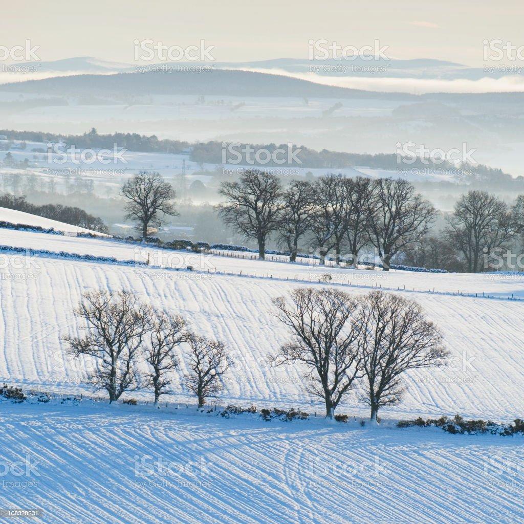 Winter fields royalty-free stock photo