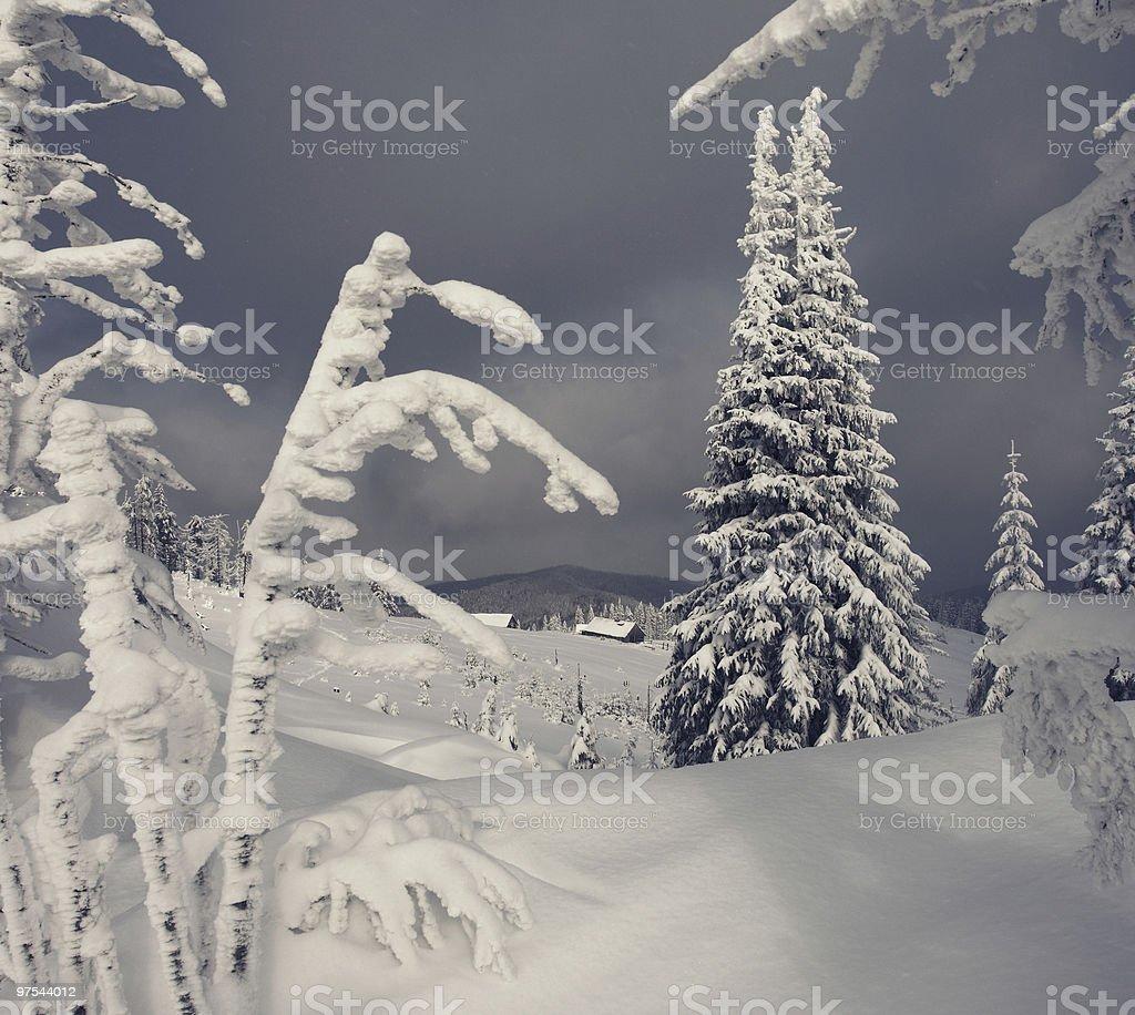 Sapin d'hiver photo libre de droits