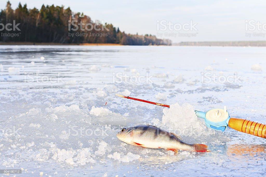 Winter fishing on ice stock photo