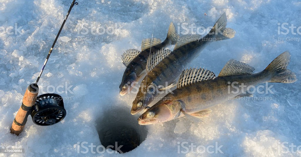 Winter fishing on zander stock photo