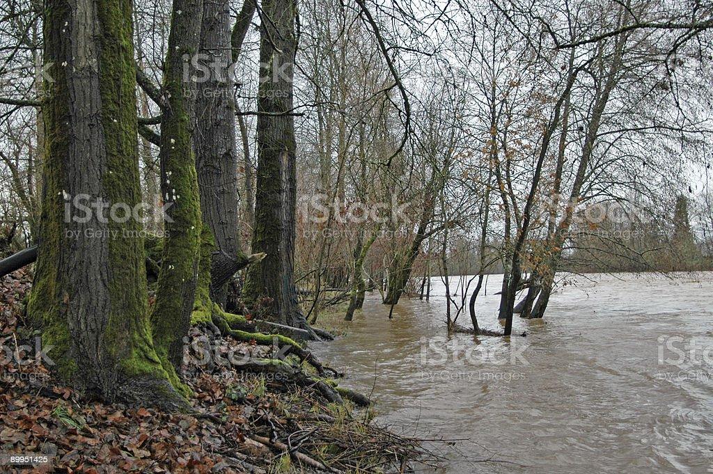 Winter flood stock photo