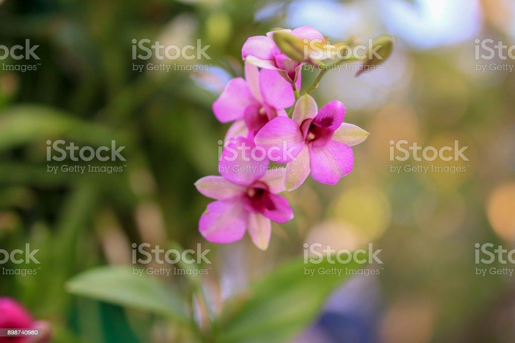 Photo de stock de Fleurs Dans Le Jardin Dhiver images libres de ...
