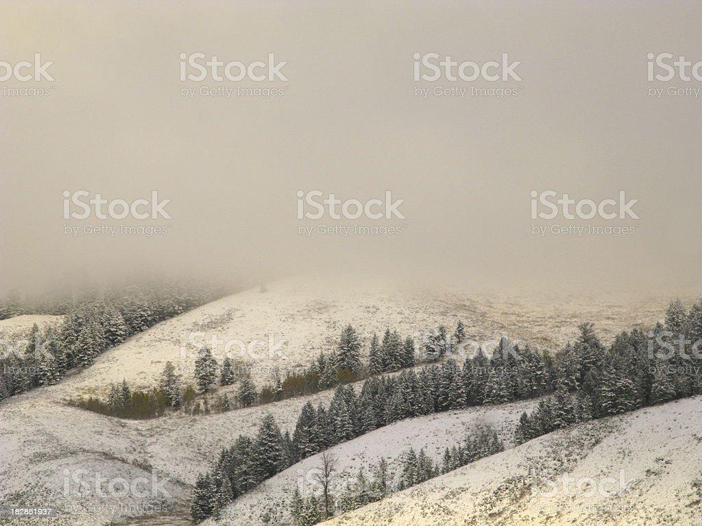 Winter Fog Snow Storm royalty-free stock photo