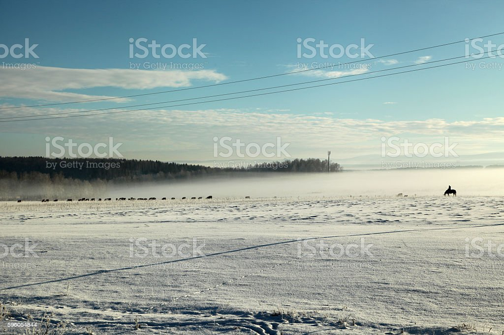 Winter foggy field at sunset royalty-free stock photo