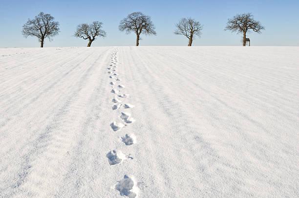 Winter footprints stock photo