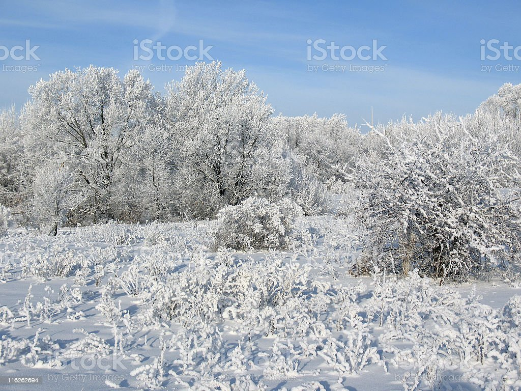 Winter forest 2 royalty-free stock photo
