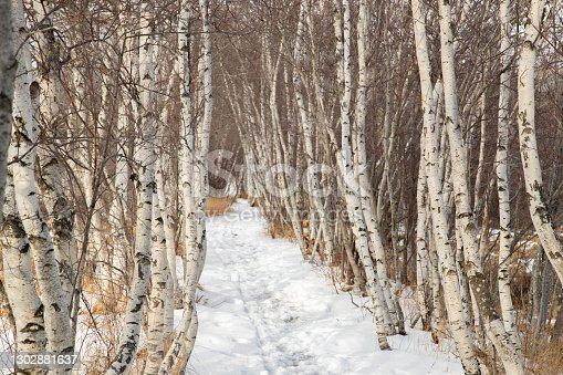istock Winter Forest Acadia National Park 1302881637