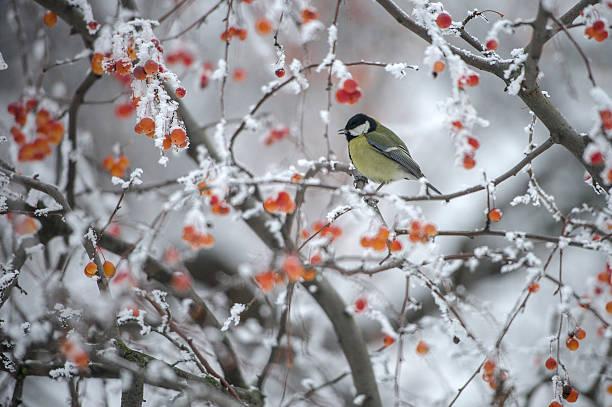 Winter forest und Vogel – Foto