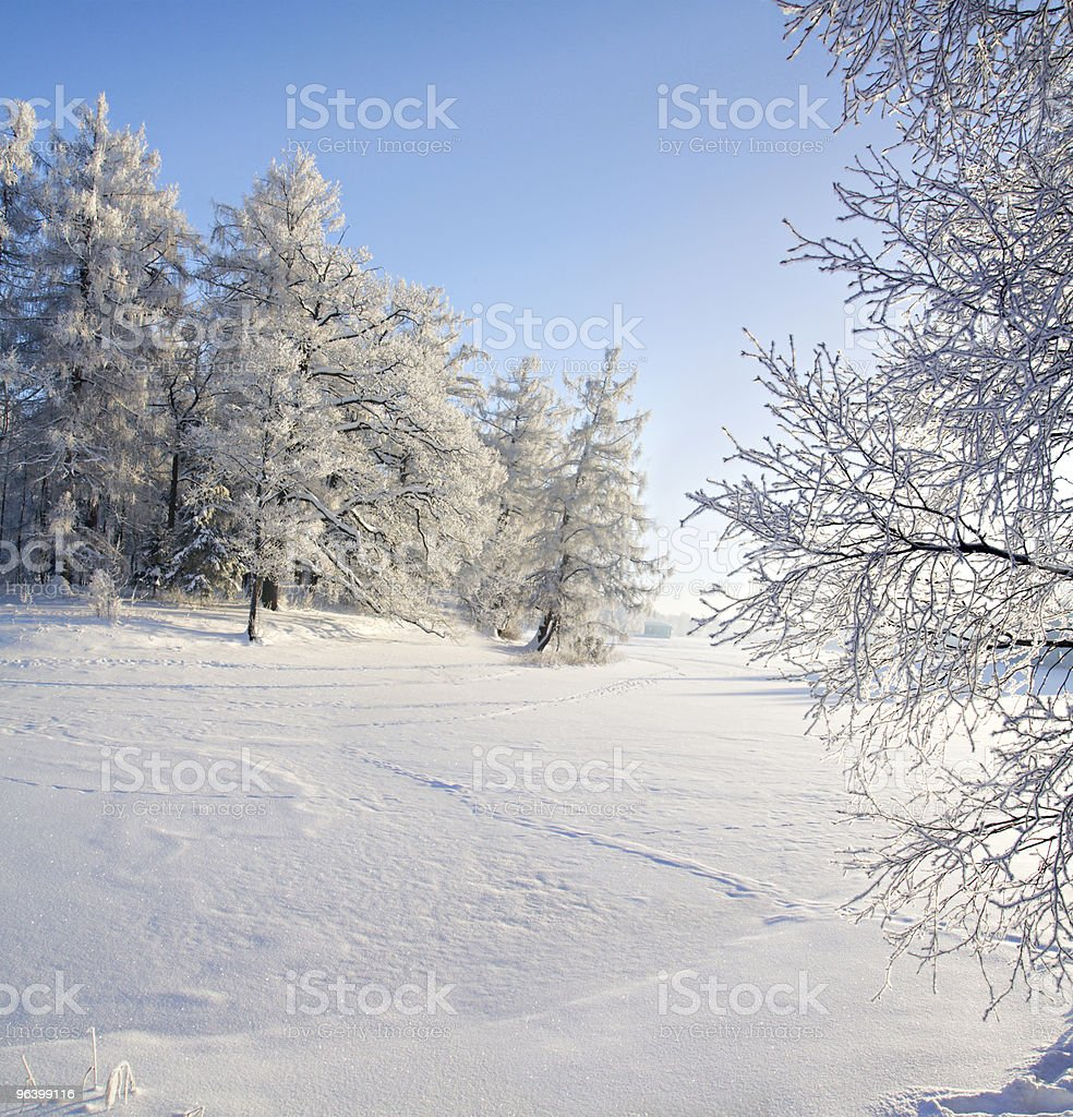 winter forest and lake - Royalty-free Agricultural Field Stock Photo