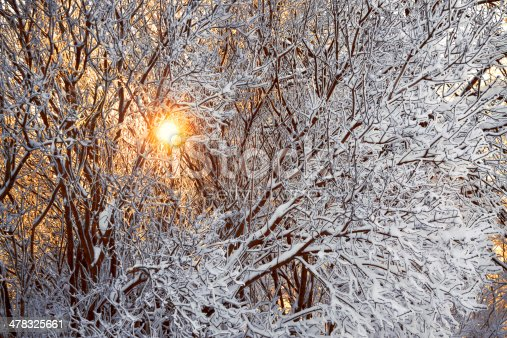 istock winter forest and sun 478325661