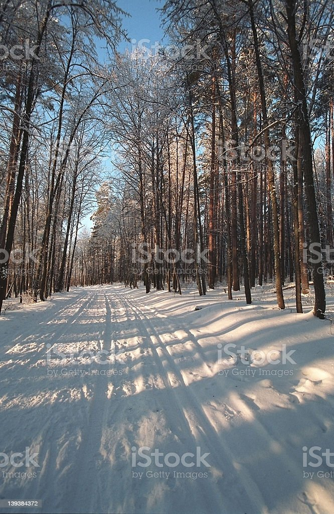 Winter forest at dawn royalty-free stock photo
