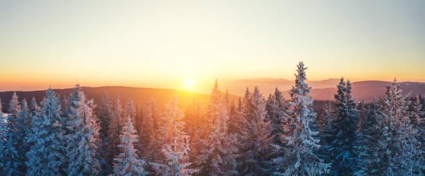 Winterwald bei Sonnenuntergang – Foto