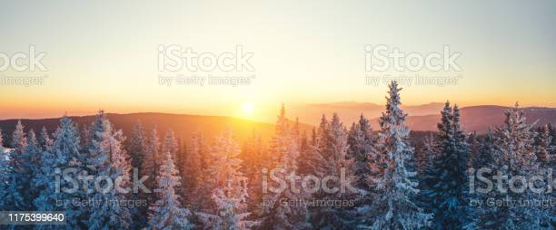 Photo of Winter Forest At Sunset